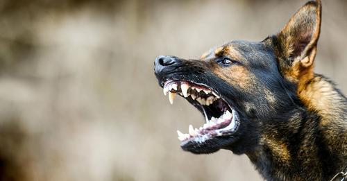 Angst vor Tollwut: USA verbieten Import von Hunden aus über 100 Ländern