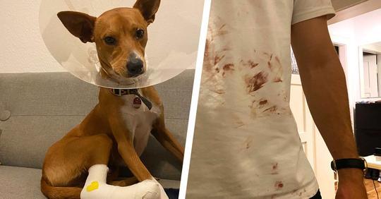 Hörte nicht auf zu bluten: Wegen euch Isar-Chaoten hat mein Hund sich die Pfote aufgeschlitzt
