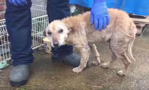 Der Tierarzt stoppt plötzlich, bevor er diesen Hund einschläfert