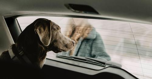 Hitzschlag im Auto: Patrouille soll Hunde auf Supermarktparkplätzen retten