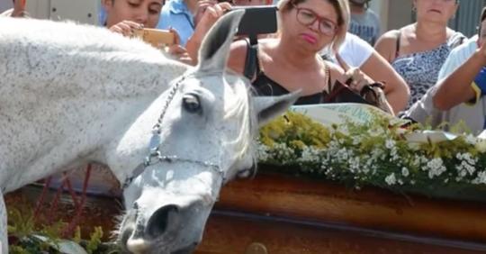 Trauerndes Pferd riecht Sarg seines Besitzers und hat emotionalen Zusammenbruch