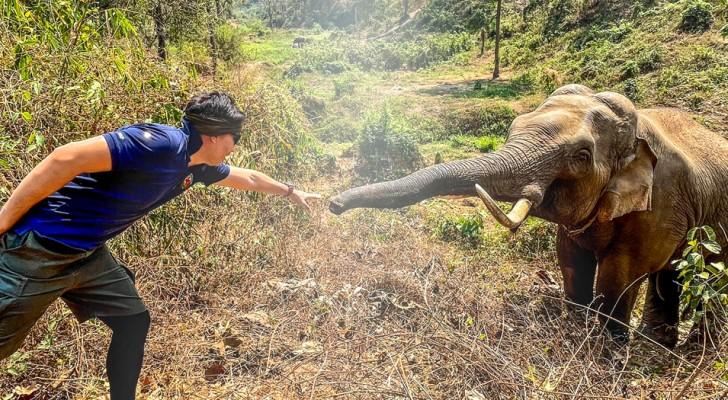 Tierarzt trifft den Elefanten, den er 12 Jahre zuvor gerettet hat: