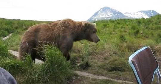 Wilder Braunbär kommt und nimmt neben Mann in Campingstuhl Platz