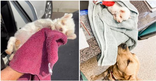 Unterernährter Welpe wird vor dem Einschläfern gerettet und überlebt dank der Blutspende eines Hundes