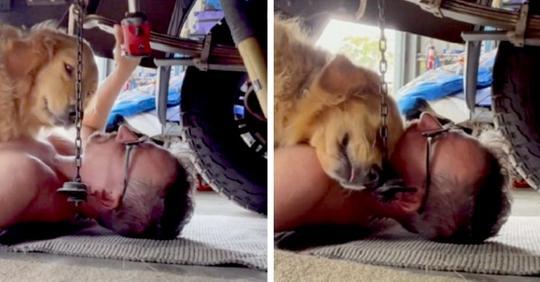 Der Hund dieses Mechanikers legt sich unters Auto, um sich von ihm streicheln zu lassen: die niedlichen Bilder