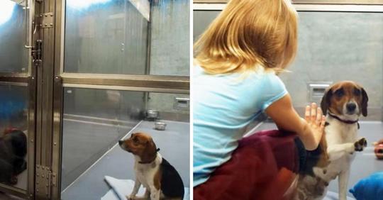 Eine Hundemama im Tierheim wird immer wieder übersehen, bis ein kleines Mädchen sie anlächelt