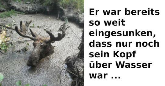 Maurice Valliere und Pat Greba retten Elch aus Schlammtümpel